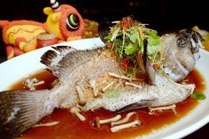 Hong Kong-style Steamed Dragon Garoupa