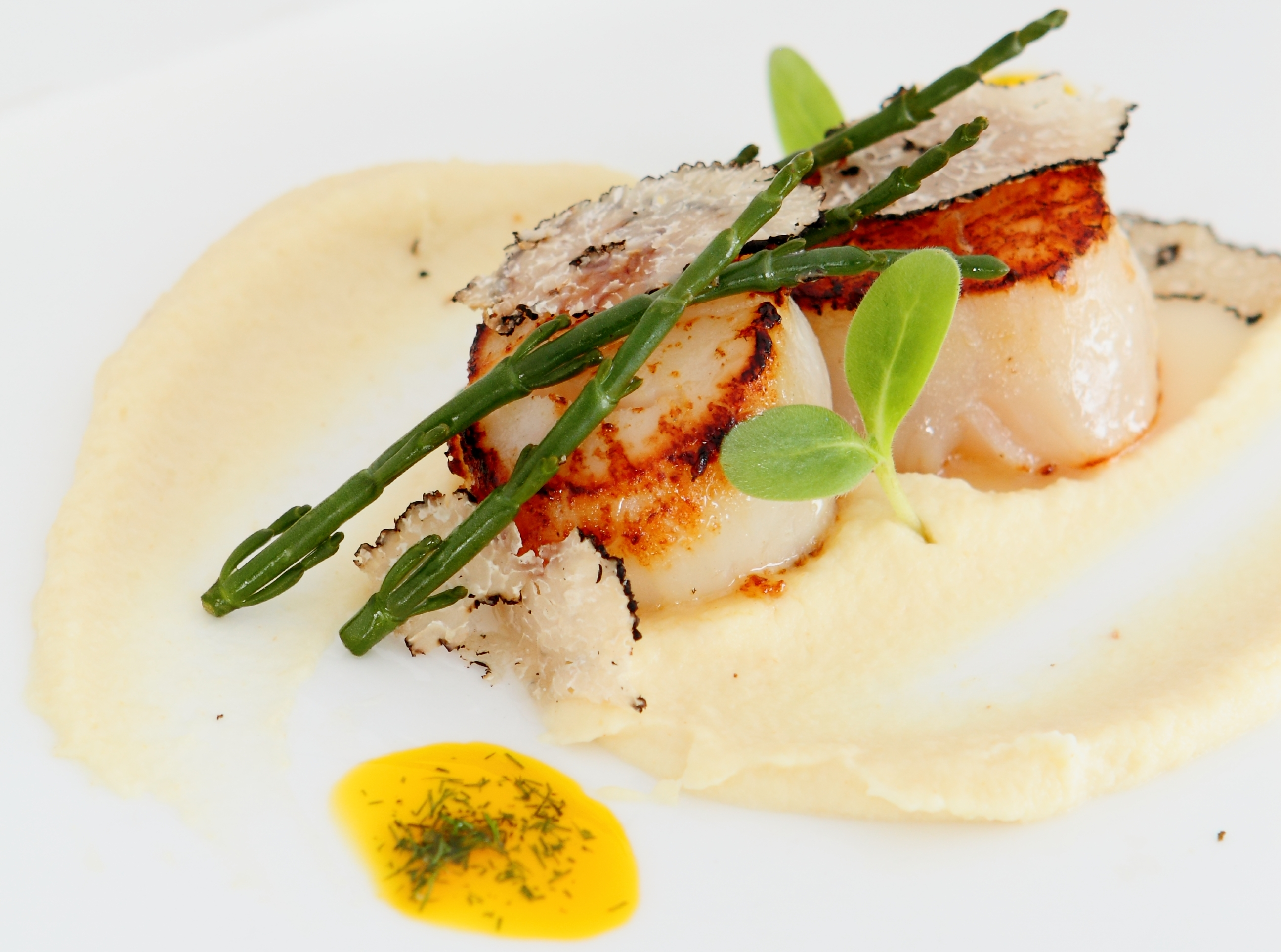 Pan-Seared Scallops with Celeriac Puree