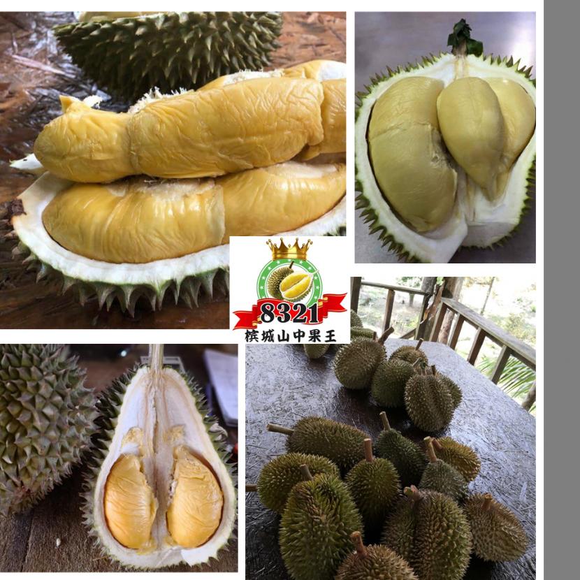 8321 Durian Plantation